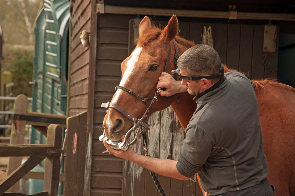 equine therapy for veterans